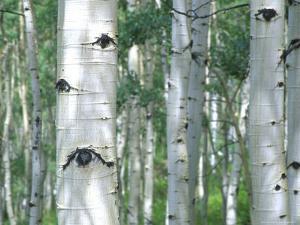 Aspen Grove, Colorado, USA by Julie Eggers