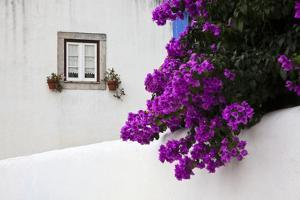 Bougainvillea Blooming in the Town of Obidos, Portugal by Julie Eggers