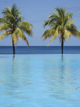 Caribbean, Honduras, Roatan. Infinity pool surrounded by palm trees. by Julie Eggers