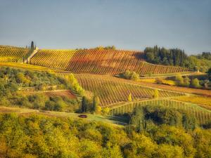 Europe, Italy, Chianti. Vineyard in autumn in the Chianti region of Tuscany. by Julie Eggers