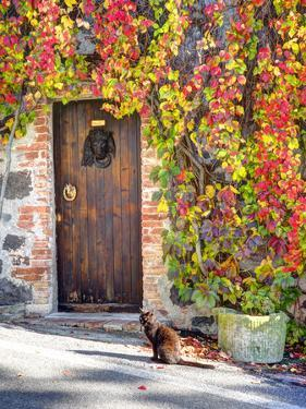 Italy, Tuscany, Contignano. a Wooden Door Surrounded by Fall and Cat by Julie Eggers
