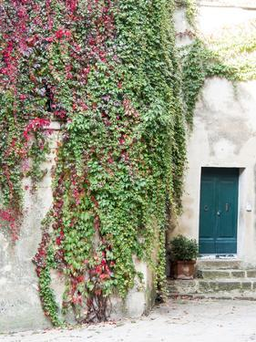 Italy, Tuscany, Monticchiello. Red Ivy Covering the Walls of Buildings by Julie Eggers