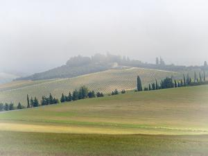 Italy, Tuscany. Small farmhouse and vineyard on a foggy morning. by Julie Eggers