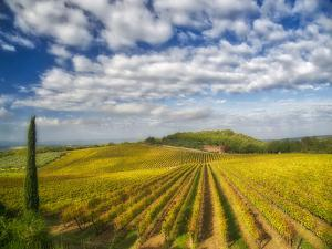 Italy, Tuscany. Vineyard leading to a farmhouse in Tuscany with blue skies and puffy clouds. by Julie Eggers