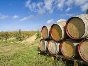 Italy, Tuscany. Wine barrels in a vineyard in Tuscany. by Julie Eggers