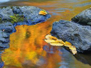 Michigan, Upper Peninsula. Fall Colors Along the River with Leaves by Julie Eggers