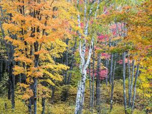 Michigan, Upper Peninsula. Hardwood Forest in Ontonagon County in Fall by Julie Eggers