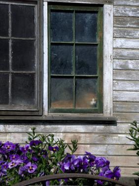 Old Barn with Cat in the Window, Whitman County, Washington, USA by Julie Eggers