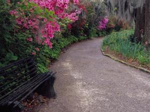 Pathway and Bench in Magnolia Plantation and Gardens, Charleston, South Carolina, USA by Julie Eggers