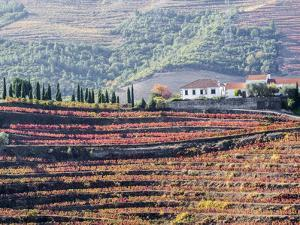 Portugal, Douro Valley. A home above the vineyards on terraced hillsides above the Douro River. by Julie Eggers