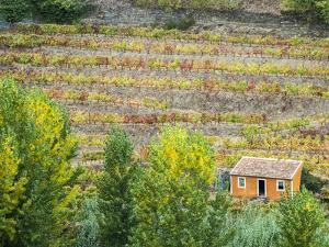 Portugal, Douro Valley. Small orange dwelling in the vineyards of the Douro Valley in autumn. by Julie Eggers