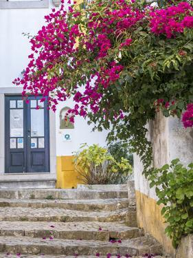 Portugal, Obidos. Beautiful bougainvillea blooming in the town of Obidos, Portugal. by Julie Eggers