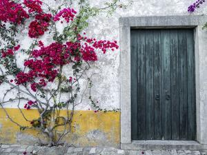 Portugal, Obidos. Beautiful bougainvillea blooming in the town by Julie Eggers