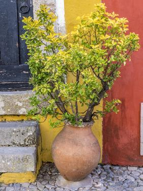 Portugal, Obidos. Potted plant in front of colorful entrance to a home in the hill town of Obidos. by Julie Eggers