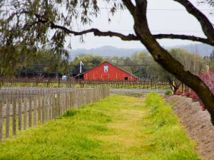 Red Barn near Vineyards, Napa Valley, California, USA by Julie Eggers