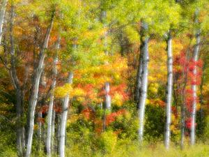 US, Michigan, Upper Peninsula. Fall colors in the forest. by Julie Eggers