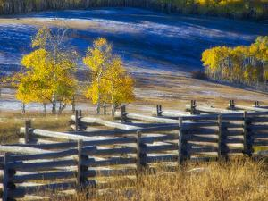 USA, Colorado, San Juan Mts. Fence line and aspens with fresh snow in the fall. by Julie Eggers