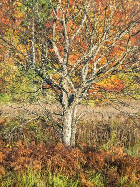 USA, Michigan, Upper Peninsula. Fall Colors in Hiawatha NF by Julie Eggers