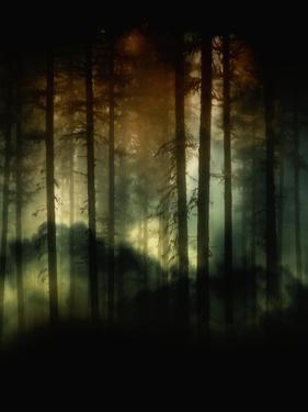 A Hidden World by Julie Fain