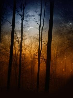 Deep In The Forest by Julie Fain