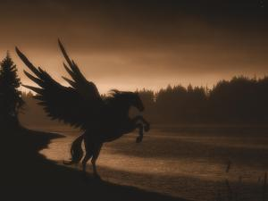 Pegasus by Julie Fain