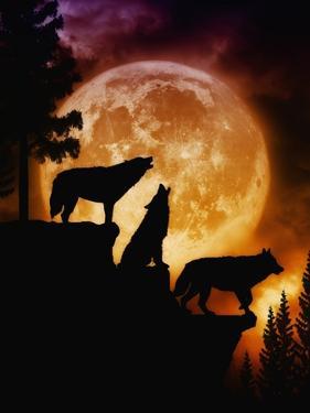 Wolves Peak by Julie Fain