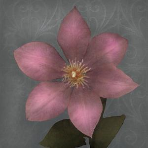 From My Garden 1-Gray by Julie Greenwood