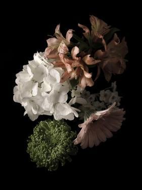 Midnight Hydrangea by Julie Greenwood