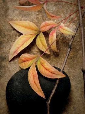 Nature's Balance by Julie Greenwood