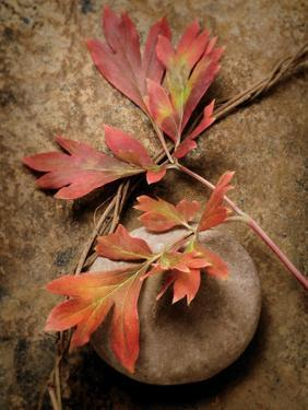 Quiet Nature Fall Collection 4 by Julie Greenwood
