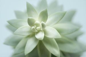 Soft Focus Succulent 2 by Julie Greenwood
