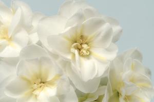 Winter Whites by Julie Greenwood