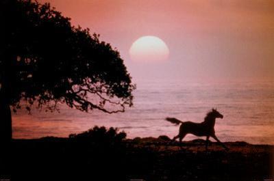 Running Horse At Sunset by Julie Habel