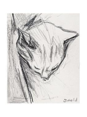 Sleeping Cat, 2015 by Julie Held