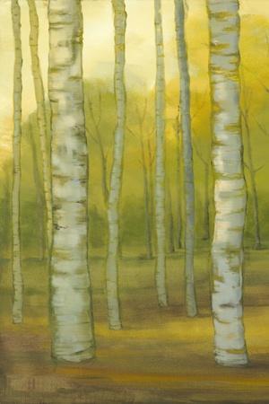 Sunny Birch Grove I