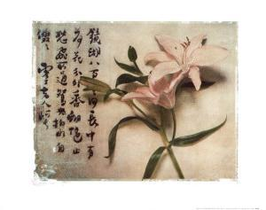 Oriental Lily by Julie Nightingale