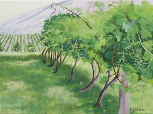 Budding Wine Grapes by Julie Peterson