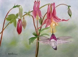 Columbine and Hummer by Julie Peterson