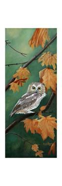 Northern Saw Whet by Julie Peterson