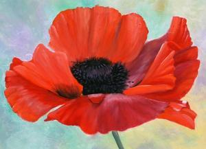 Poppy I by Julie Peterson