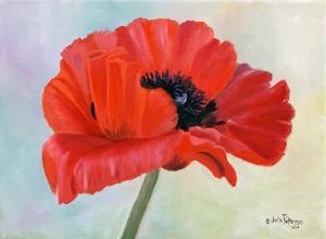 Poppy II by Julie Peterson