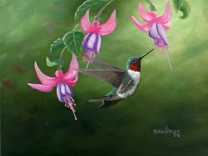Rufous and Fuchsias by Julie Peterson