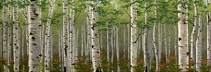 Summer Birch Forest by Julie Peterson