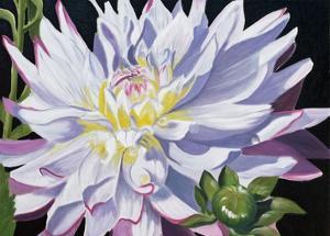 White Dahlia by Julie Peterson