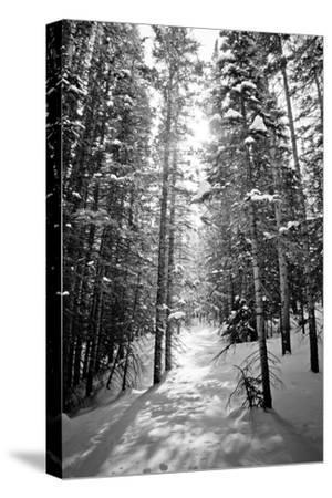 Snow Covered Pines Trees by Julie Rideout