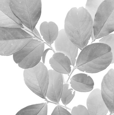 Dancing Leaves I by Julie Silver