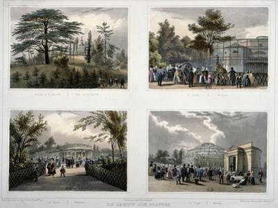 The Jardin Des Plantes in Paris: Cedar and the Labyrinth, the Giraffe, Pheasants, Monkeys