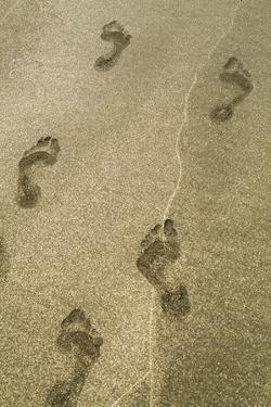Footprints in the Sand, Puerta Vallarta, Mexico by Julien McRoberts