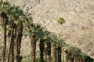 Scenic of Palm Trees, Palm Springs, California, USA by Julien McRoberts