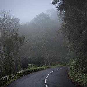 Empty Road under Mist by Julio Lopez Saguar
